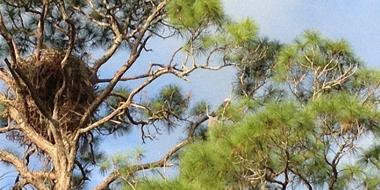 2 Scarlet Oak Circle Palm Coast_05